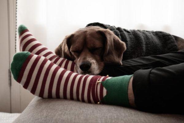 Cómo celebrar la Navidad con tu perro: ideas y consejos casito