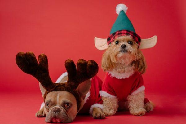 Cómo celebrar la Navidad con tu perro: ideas y consejos disfraz