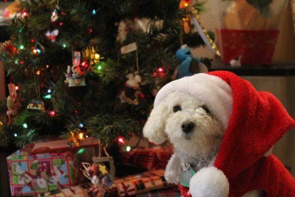 Cómo celebrar la Navidad con tu perro: ideas y consejos dulces