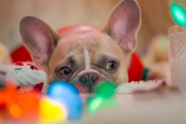 Cómo celebrar la Navidad con tu perro: ideas y consejos luces