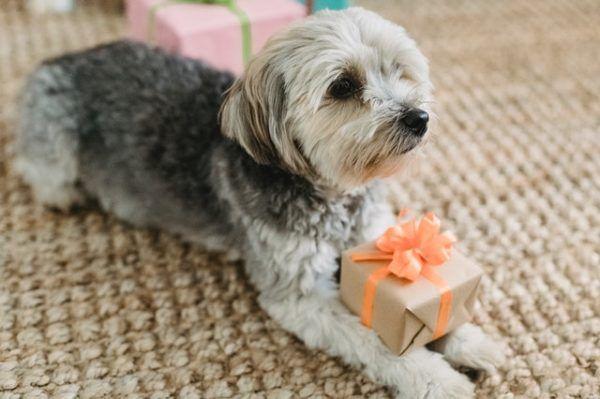 Cómo celebrar la Navidad con tu perro: ideas y consejos regalo