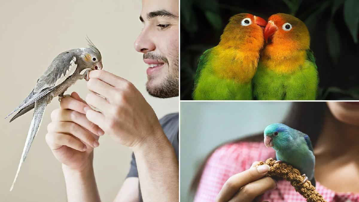 Ideas de nombres para pájaros