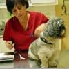 Calendario vacunación de los perros