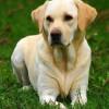 Los mejores nombres para perros