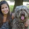 Perro de agua español, fotos, razas de perros