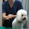 Cursos de Peluqueria Canina