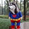 50 Disfraces caseros para mascotas | Halloween 2014