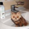 gatos_graciosos_5