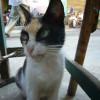 gatos_graciosos_6