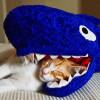 gatos_graciosos_8