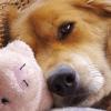 Nombres para perros más populares en inglés