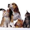 Los nombres más populares para mascotas