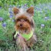 Nombres de perro | Machos