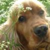 Infecciones de la piel en perros