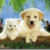 Cuidado especiales para mascotas