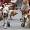 Discapacidad y rehabilitación en perros