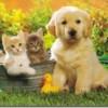 Las enfermedades que nos transmiten las mascotas