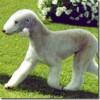 Mascotas hipoalergénicas