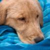¿En qué consiste la homeopatía veterinaria?