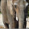 Depresión en elefantes