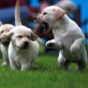 Mejores perros para niños