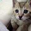 Nombres de gatos | Machos