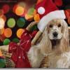Wallpapers Christmasanimal21280