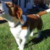 Ladrido de los perros | ¿Cómo controlarlo?