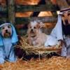 nacimiento-perros