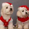 perros-navideños