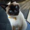 Curiosidades de mascotas | Gatos
