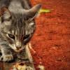 Elegir el nombre del gato