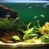 ¿Cómo construir nuestro propio acuario?