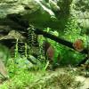 Peces de acuario y sus enfermedades