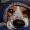 Temperaturas frías y las mascotas