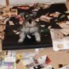 Tratamientos contra la ansiedad por separación en perros