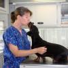 Cómo elegir el veterinario