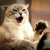 Qué hacer si nuestro gato es agresivo