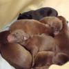Perros: Primeros días de vida en la jauría