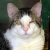 Conjuntivitis gatos