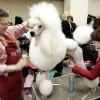 peinados perros