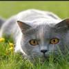 Cómo puedes evitar que tu gato cace animales