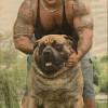 dueño y perro iguales