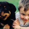 Fotografía a tus mascotas