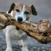 ¿Se le puede dar huesos a las mascotas?