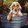 ¿Puedo bañar a mi mascota con mi champú?