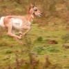 ¿Cuál es el animal más rápido de la tierra? El Guepardo NO
