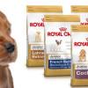 La importancia de una buena alimentación para nuestras mascotas