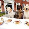 ¿Qué comidas de humano pueden comer los perros?