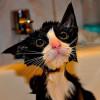 Divertida Recopilación de fotos de Gatos Mojados